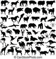 Ilustración de animales