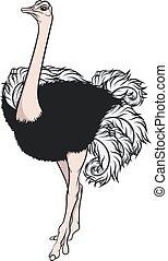 Ilustración de color de un avestruz.