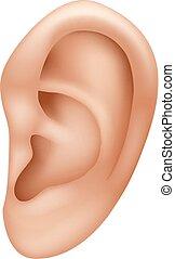 Ilustración de oído humano aislado