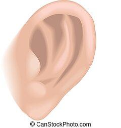 Ilustración de oídos