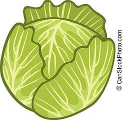 Ilustración de repollo verde