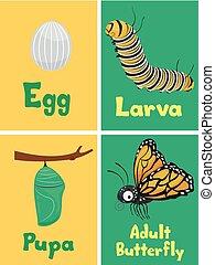 Ilustración de tarjetas de ilustración