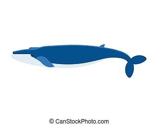 Ilustración de vectores de ballena azul gigante