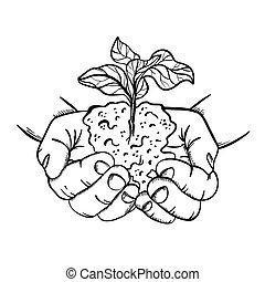ilustración, estilo, vector, bosquejo, planta, conjunto, manos de valor en cartera