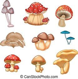 ilustración, hongo, colección
