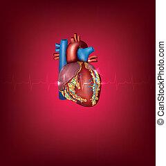 Ilustración médica del corazón humano en un fondo rojo brillante