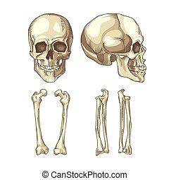 Ilustración médica del cráneo y los huesos humanos