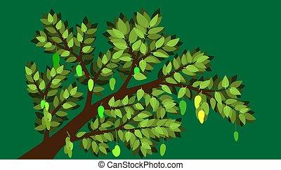 ilustración, mínimo, elemento, planta, rama, natural., mango, árbol, fruite, muchos, vector, grande, eps10., product., hoja
