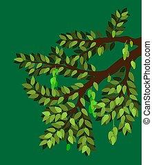 ilustración, planta, elemento, rama, natural., mango, árbol, fruite, muchos, vector, grande, eps10., product., hoja