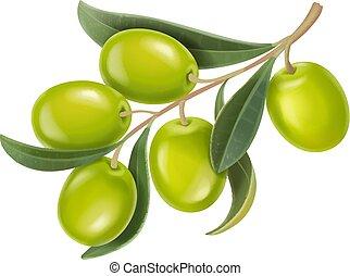 Ilustración realista vector de ramas de olivas verdes aisladas en el fondo blanco.