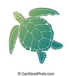 ilustración, tortuga, vector