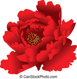 ilustración, vector, romántico, peonía, rojo