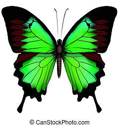 Ilustración vectora de hermosa mariposa verde aislada en un fondo blanco