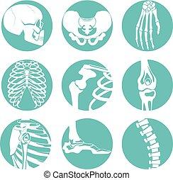 Ilustraciones de anatomía humana. Fotos ortopédicas de esqueleto y huesos diferentes
