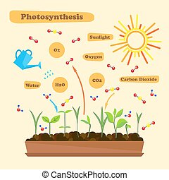 Imágenes de fotosíntesis