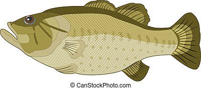 Imágenes de peces en un fondo blanco. Vector