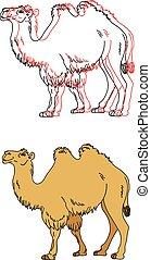 Imágenes de un camello