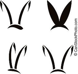 Imágenes de un conejo de fondo blanco