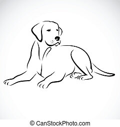 Imágenes de un perro labrador
