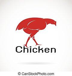 Imágenes de un pollo de fondo blanco