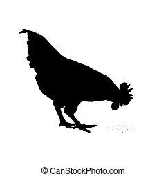 Imágenes de un pollo en un fondo blanco.