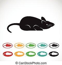 Imágenes de una rata en un fondo blanco