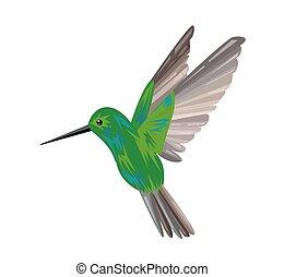 imagen, caliber., multicolor