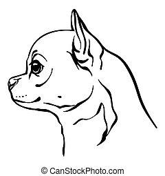 imagen, perro, vector, chihuahua, fondo blanco
