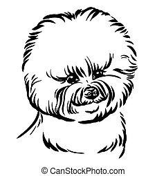 imagen, perro, vector, fondo blanco, bishon