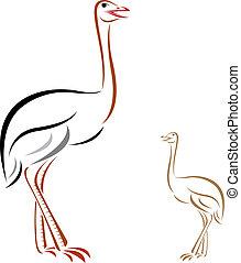 Imagen vectora de avestruz