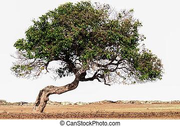 inclinación, árbol