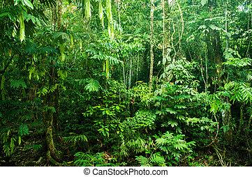 Increíble bosque tropical denso