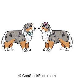 inglés, pedigrí, mascot., casta, perrito, lovers., caricatura, ilustración, perrito, salón, canino, vector, hunting., aislado, perro doméstico, perrera, lindo, niño, mascota, pastor, niña, australiano, purebred, clipart.