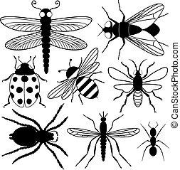 insecto, ocho, siluetas