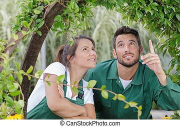 inspeccionar, arco, pareja, planta, jardinería, cubierta