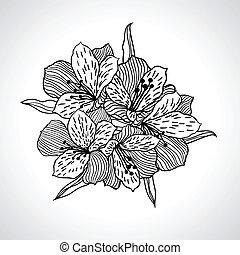 isolated., macro, flor, negro, orquídea