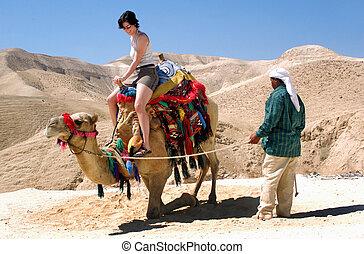 israel, viaje, -, judaean, fotos, desierto