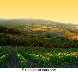italia, maduro, púrpura, toscana, viña, uvas, salida del sol
