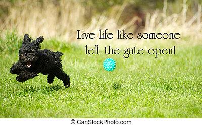 """izquierda, inspirador, como, excelente, felizmente, """"live, vida, fullest, open"""", adorable, puerta, juguete, summer., poodle, alrededor, alguien, palabras, el gozar"""