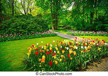 Jardín en Keukenhof, flores de tulipanes y árboles. Holanda