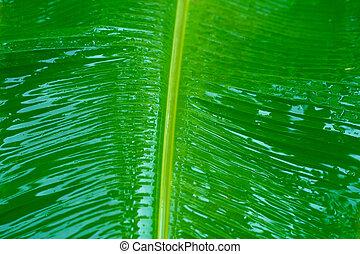 jardín, hoja, árbol verde, después, gotas de lluvia, lluvia, plátano
