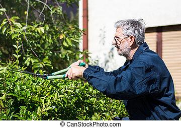 Jardinero podando seto con tijeras de jardín