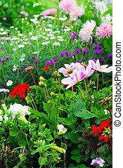 jardines, versailles