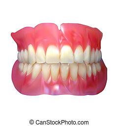 jaw., mandíbula, diente