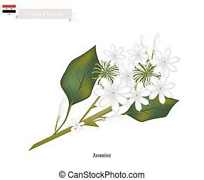 Jazmín blanco, la flor nacional de Siria