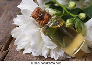 jazmín, macro, fragante, flor blanca, aceite