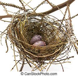 jerarquía del pájaro, huevos, blanco