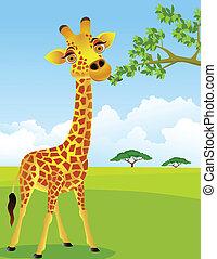 jirafa, hoja, comer