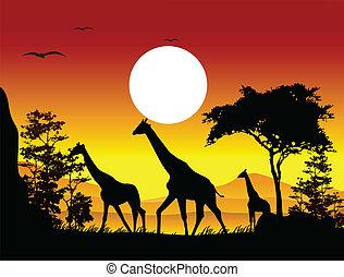 jirafa, silueta, belleza, familia