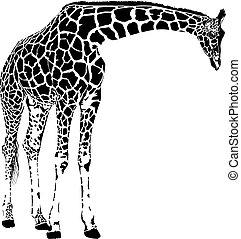 jirafa, vector